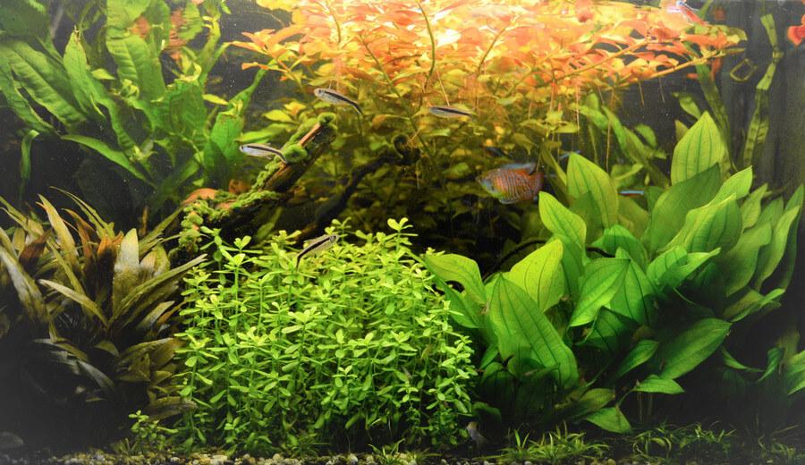Lees meer over het artikel Makkelijke Aquariumplanten