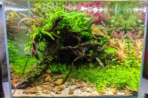 Lees meer over het artikel Hulp bij aquascaping